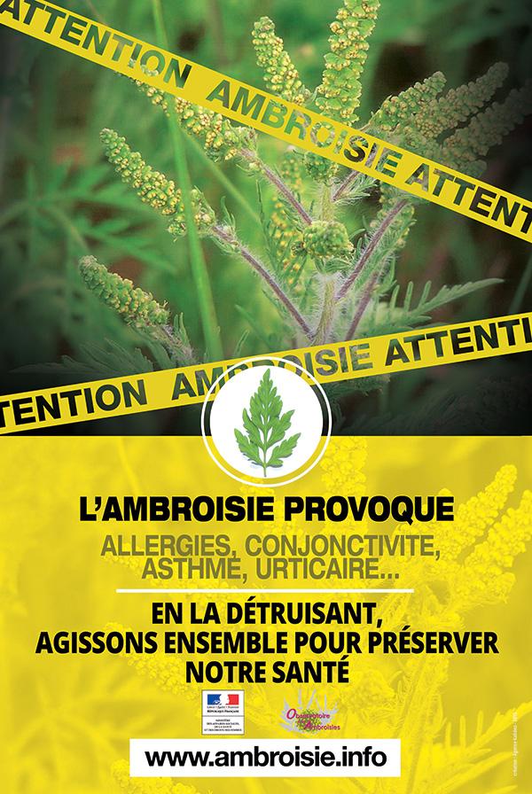 Affiche Info Ambroisie