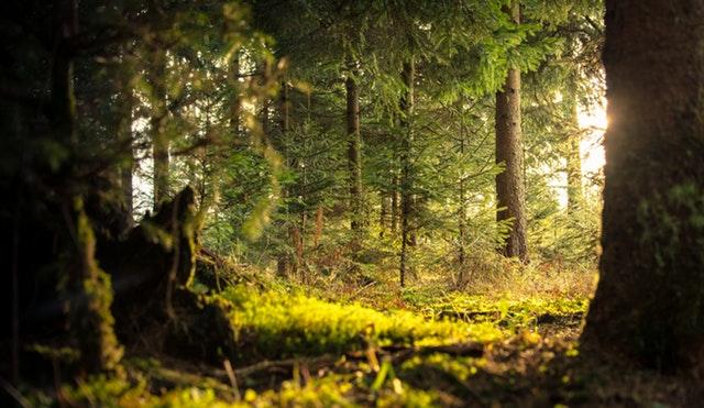 Promenons-nous dans les bois …