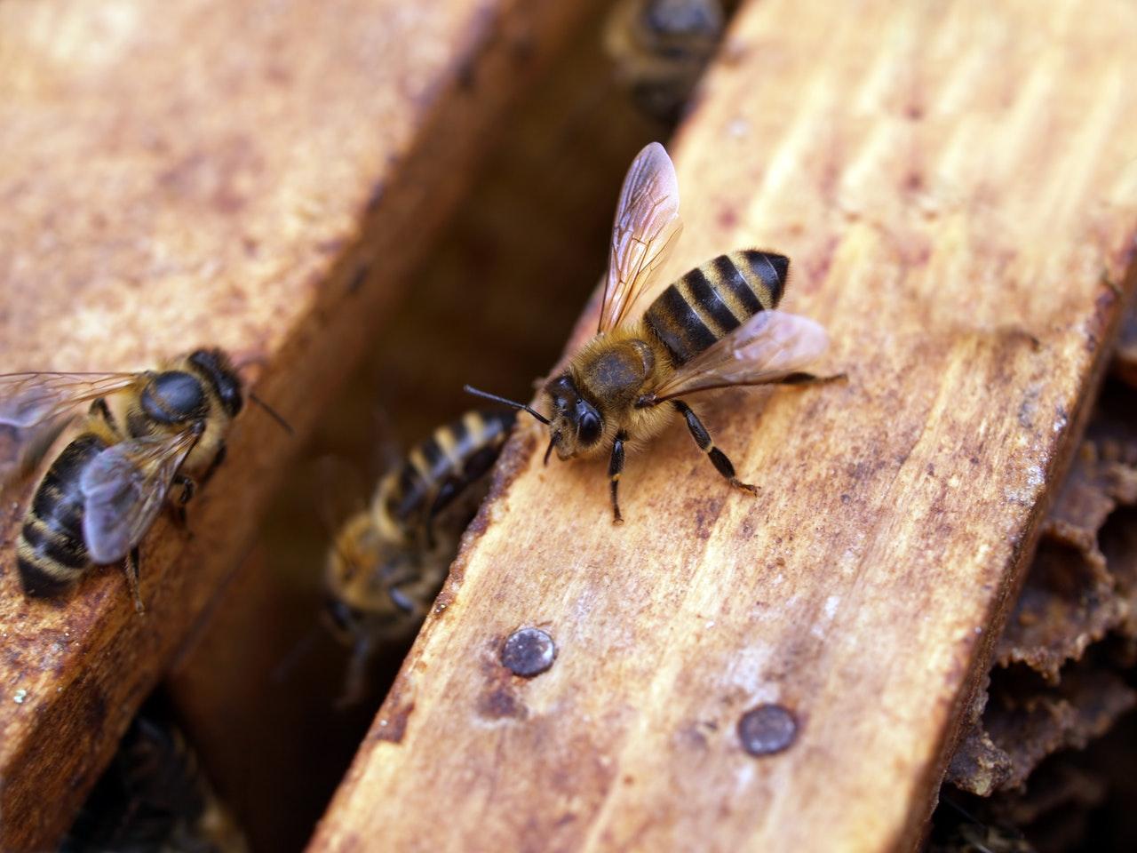 Conférence-Visite au rucher école de Réalmont
