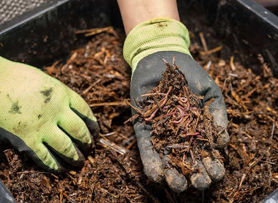Développement du compostage en Centre Tarn : Les élèves du collège Louisa Paulin exemplaires !